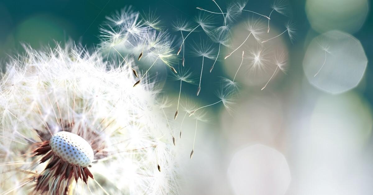 Jak zmírnit příznaky alergie? Poznejte kvercetin - účinného pomocníka na alergie.